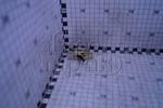 Переключатель (тумблер) 3-контактный